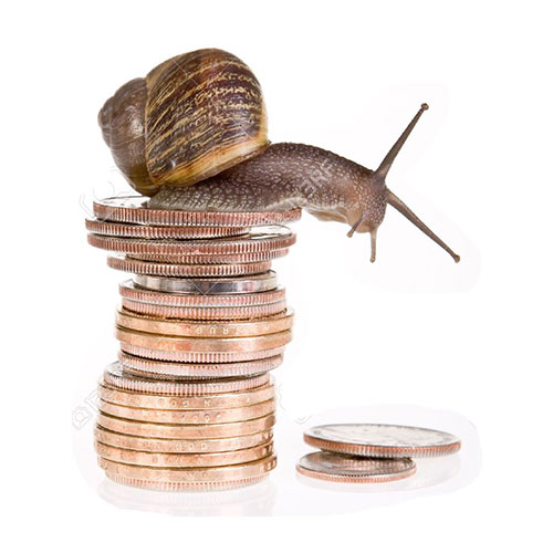 snail farming franchise opportunity